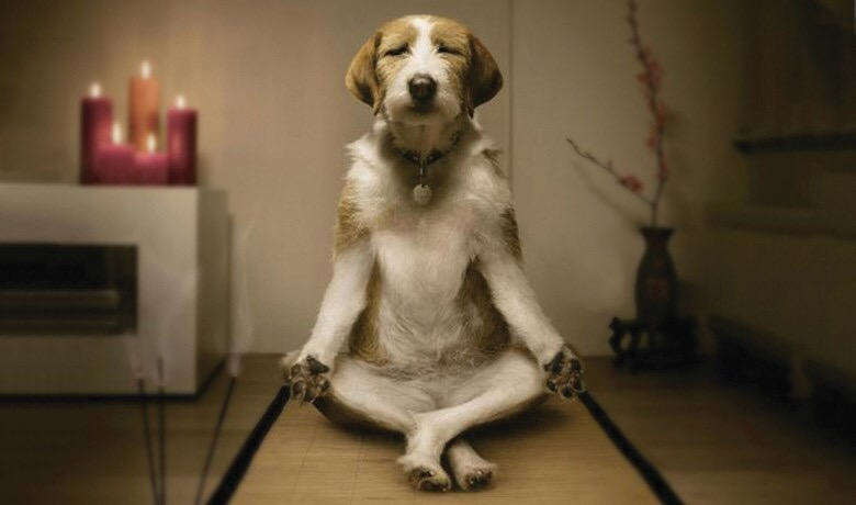 Dog sitting upright and cross-legged, looking 'zen'