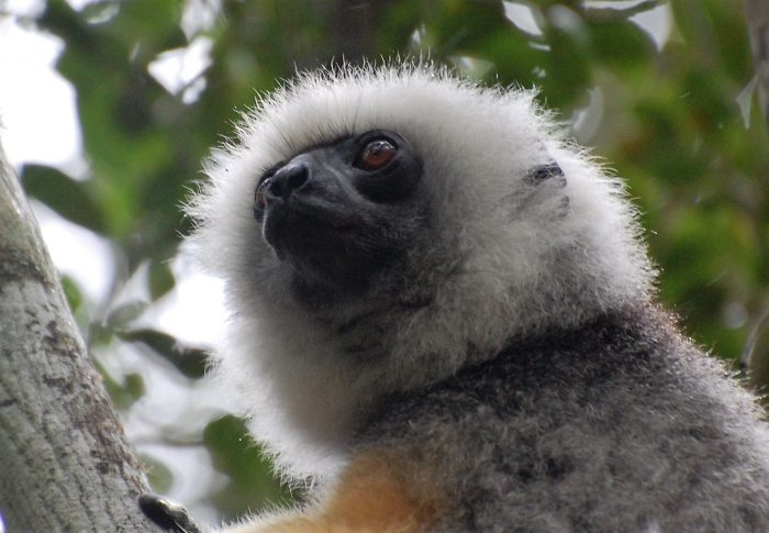 10 essential things to know about Madagascar
