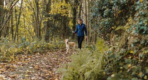 Lady walking dog in forest